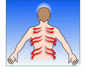Outline of man showing nerve channels flow from spin to the sides
